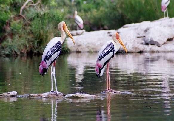 Explore wildlife in Dubare Reserve Forest