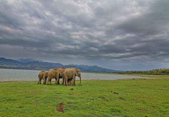Witness some wildlife acitivities in national park