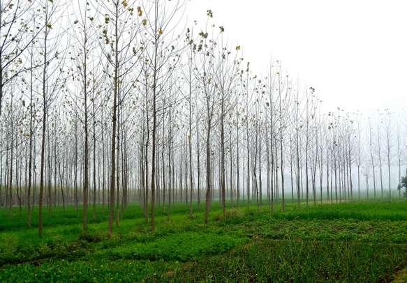 Uttarakhand is full of greenery