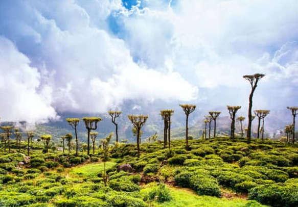 Soak in the natural beauty as you explore lush tea estates of Sri Lanka