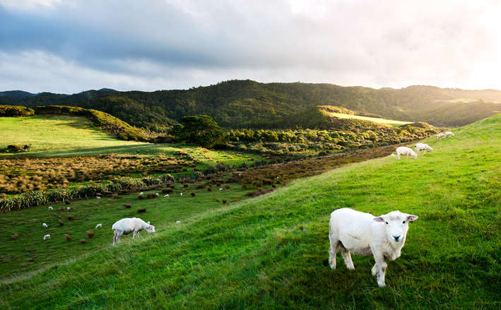 Splendid New Zealand Tour Package From Chennai