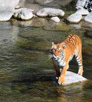 Exciting Jim Corbett National Park Tour Package