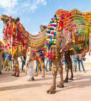 Magnificent Jaisalmer Tour Package