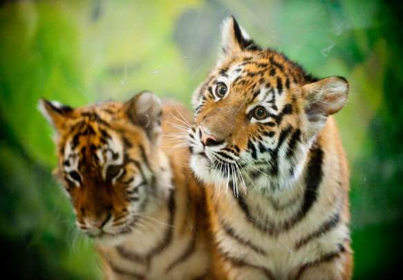 Visit one of the most famous national parks in the country- The Jim Corbett Park