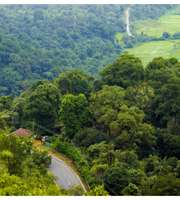 Enticing Tour To Romantic Coorg