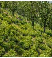 A Delightful Kasauli Tour Package