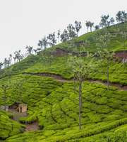 Romantic Ooty Tour Package