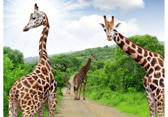 Come face to face with an unimaginable wildlife adventure
