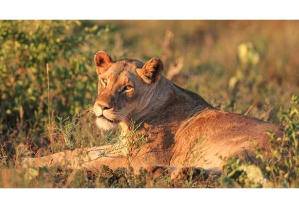 Thrilling wildlife activities