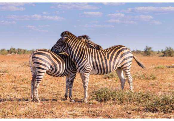 Thrilling trip to south Africa