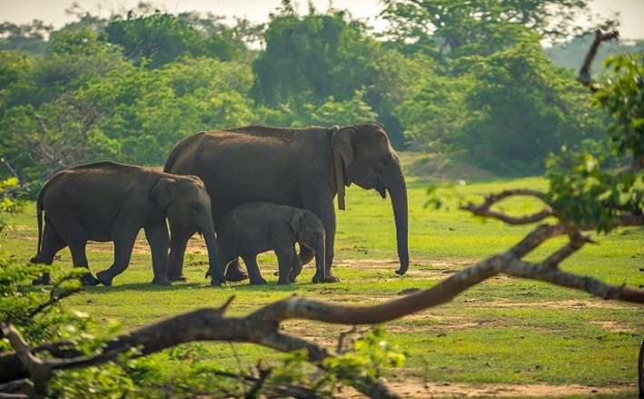 Tantalizing Thekkady Tour With Houseboat Stay