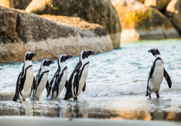 Have a memorable vacation in Cape town
