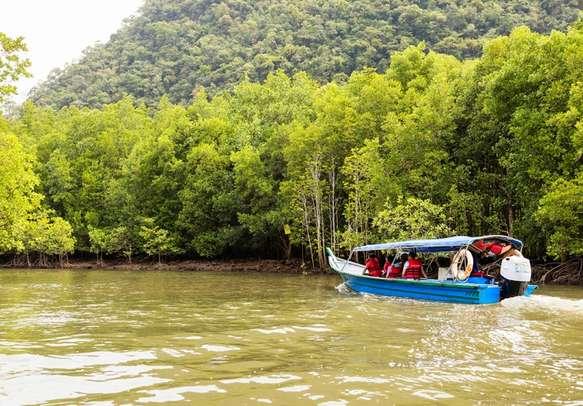 Enjoy Mangrove Cruise in Langkawi