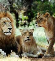 Thrilling Johannesburg Tour Package With Kruger Safari