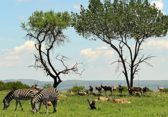 Witness breathtaking wildlife