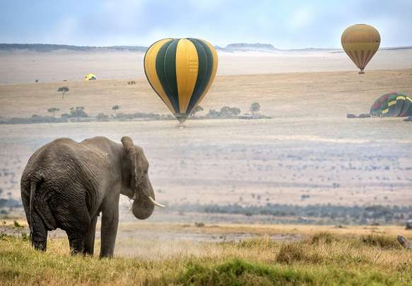 Indulge in hot air balloon rides