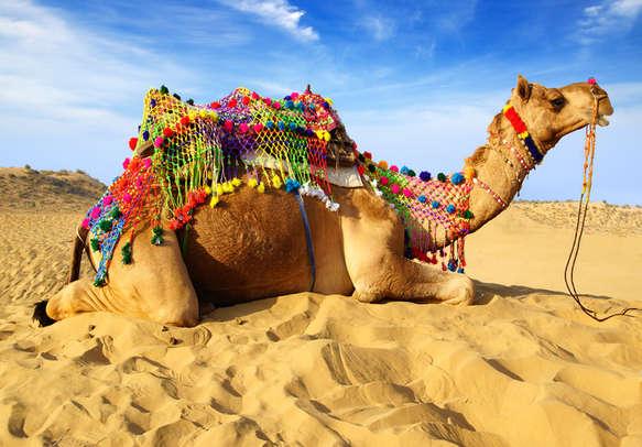 Enjoy camel ride in Rajasthan