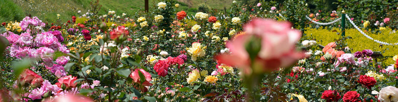 A day most fragrant and beautiful