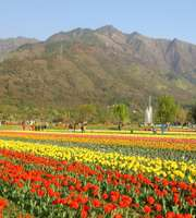 Marvelous Kashmir Honeymoon Package From Bangalore