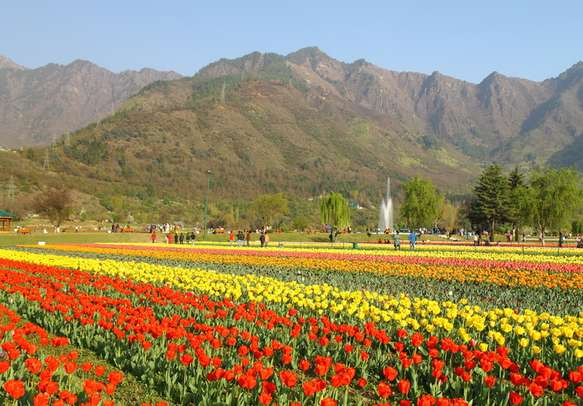 Enjoy the tulip festival in Kashmir