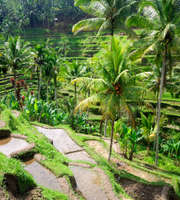 Bali Tour Package From Surat