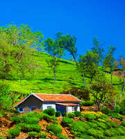 Super Romantic Coorg Honeymoon Tour