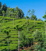 Mesmerising Ooty Sightseeing Tour Package