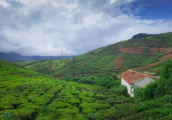 Lush greenery in Coorg gives a soothing feeling to every nature lover