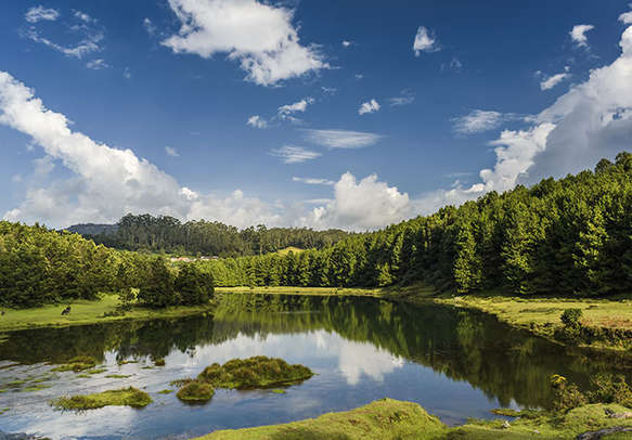 Relish the scenic views of the beautiful hill station of Ooty