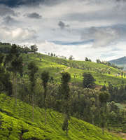 Chikmagalur Honeymoon Package From Chennai