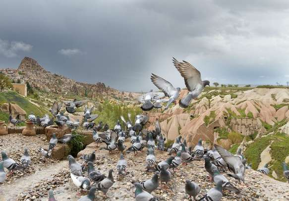 Watch the lovely Pigeon Valley