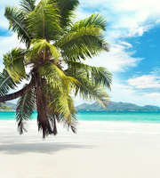 Exotic Seychelles Family Packages