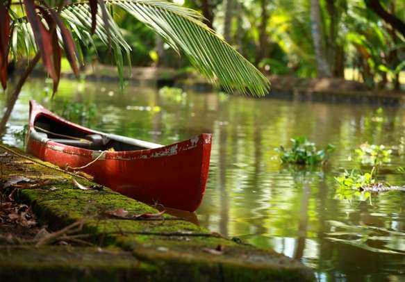 Delight in a charming cruise on backwaters