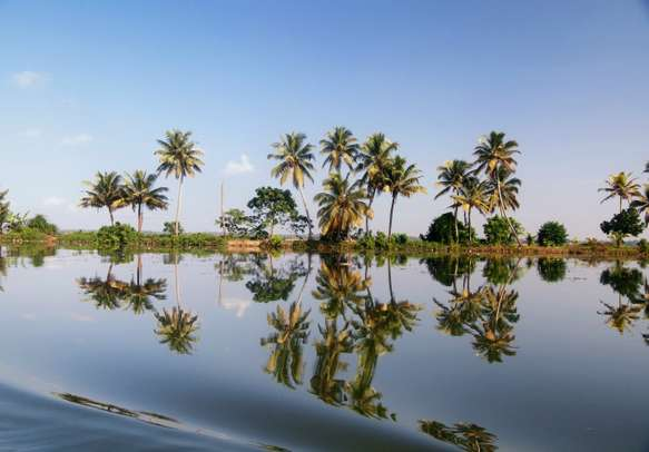 Watch coconut trees while cruising