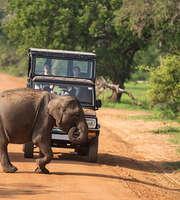 An Excursion To Exotic Sri Lanka
