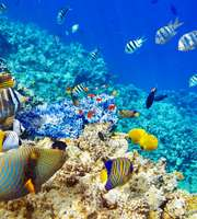 Port Blair Local Tour Package
