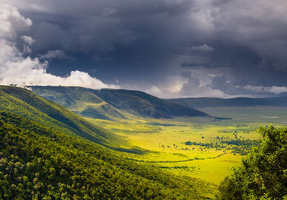 Forest in the Ngorongoro Crater
