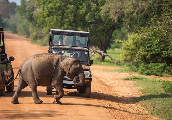 Elephant in Yala National Park in Sri lanka
