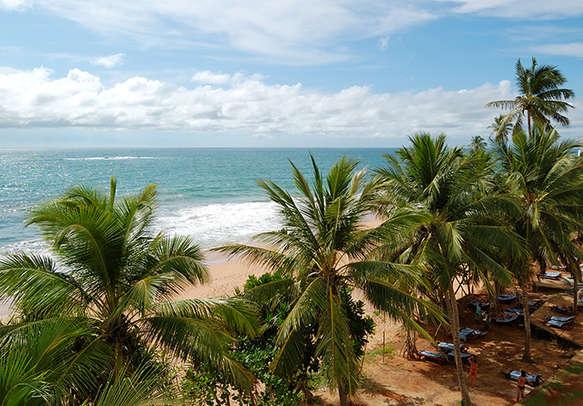 Visit turtle hatchery on your Sri Lanka holiday