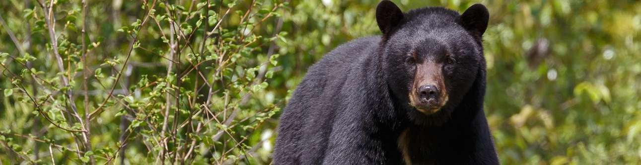 Black Bear Sanctuary In Hampi