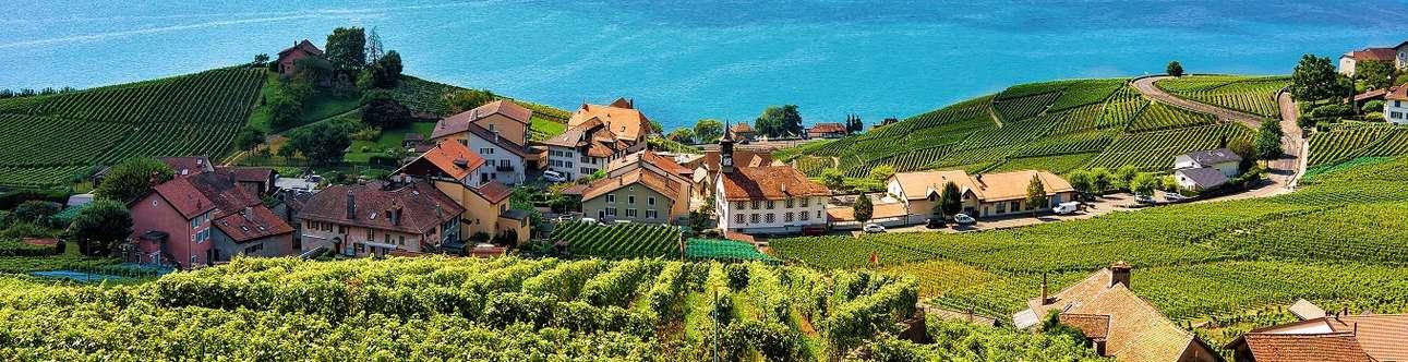 Lavaux Vineyard In Geneva