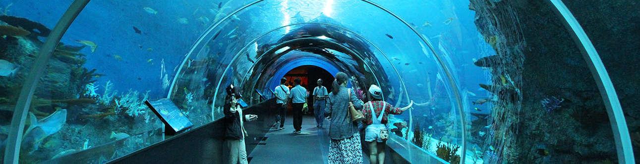 Sea Aquarium In Sentosa