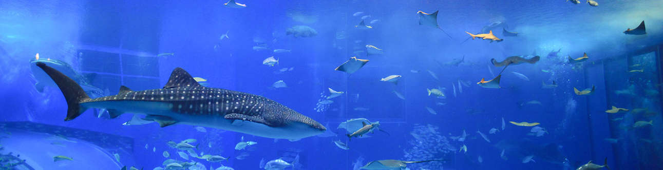 Visit the sea life aquarium in Auckland