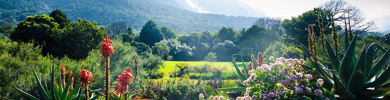 Visit the Kirstenbosch Gardens in Cape Town