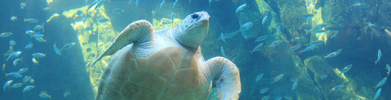 Visit the Two Oceans Aquarium in Cape Town