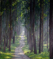 A Lovely Honeymoon In Munnar