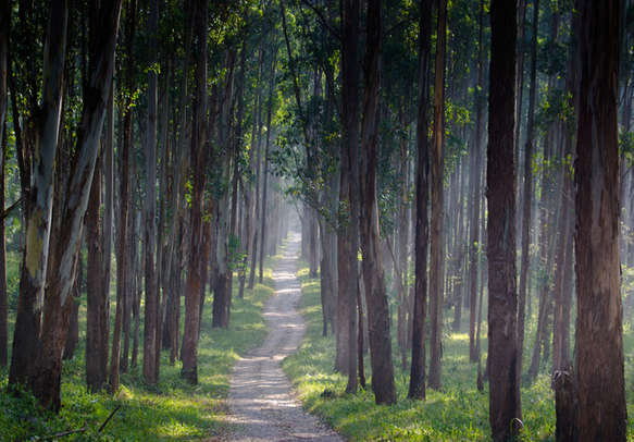 A path Through a Forest in Wayanad in Kerala
