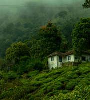 A Romantic Honeymoon In Scenic Munnar