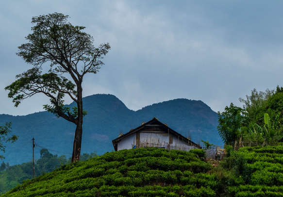 The lush greens of Wayanad are spellbounding
