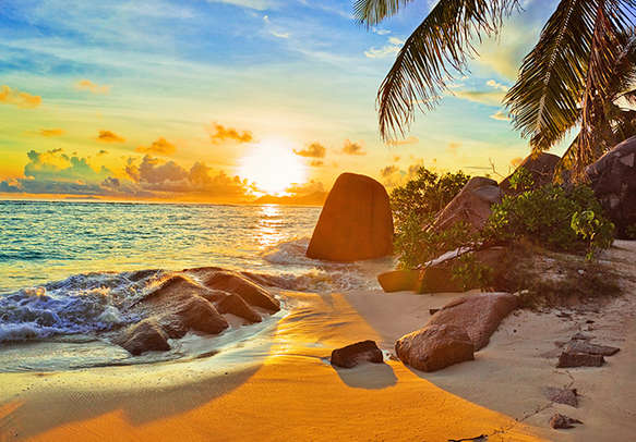 The blooming beauty of Seychelles